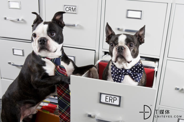 two-dogs-in-file-cabinet_crm_erp_comparison_similar_pairs-100748556-large.jpg